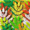 Ferns Stock Images
