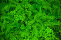Ferns Background Royalty Free Stock Photos