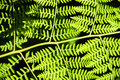 Ferns in the garden route south africa Royalty Free Stock Photo