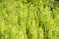 Ferns growing in spring morning sun Stock Photos
