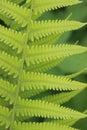 Ferns patterns Royalty Free Stock Photo