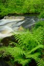 Ferns by stream in the forest wolf creek running through banning state park minnesota Stock Photo
