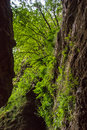 Ferns and vegetation lush of trees shrubs flowers arranged vertically at the entrance of a grotto with waterfall Stock Photo