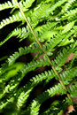 Ferns in woodland in sunlight exmoor national park somerset england uk Royalty Free Stock Images