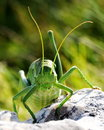 Ferocious green insect Stock Photography