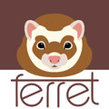 Ferret face front side vector illustration style