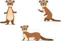 Ferret illustrations in different poses.