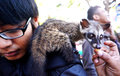 Ferret lover was to disseminate to the public in a park in the city of solo central java indonesia Royalty Free Stock Photos