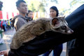 Ferret lover was to disseminate to the public in a park in the city of solo central java indonesia Stock Image