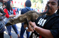 Ferret lover was to disseminate to the public in a park in the city of solo central java indonesia Stock Photos