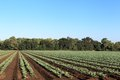 Fertile Agricultural Land Royalty Free Stock Images