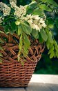Wooden picturesque basket and a spring bouquet of white wildflowers. A house and a garden Royalty Free Stock Photo