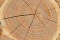 Fetta di sfondo naturale del legname di legno Immagine Stock Libera da Diritti