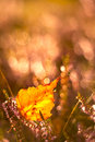 Feuille d automne Photo stock