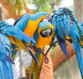 Few parrots in tropical park of nong nooch in pattaya thailand Stock Photography