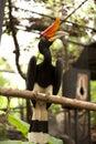 Fågelparadis Arkivbild