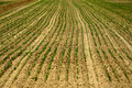 Field, arable land. Royalty Free Stock Photo