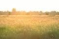 Field Background With Wild Flo...