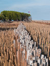 Field of bamboo tube and view point Stock Photography