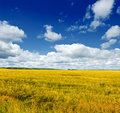 Field beautiful summer landscape sky and grass Royalty Free Stock Photography