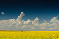 Field with blue sky and white clouds yellow under a dark fluffy Stock Photo