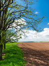 Field boundary in countryside spring rural view of pretty farmland with trees border Royalty Free Stock Photography