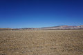 Field after chop corn photo of the blue sky sunny day mountains on background coloredo Royalty Free Stock Photo
