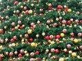 Field of christmas decoration Royalty Free Stock Photo