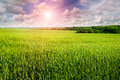 Field , cloudy sky and sunrise Royalty Free Stock Photo