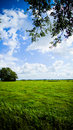 Field in countryside Royalty Free Stock Photos