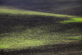 Field crops shapes and colors the dark soil green plants of a crop on undulating hills Royalty Free Stock Image