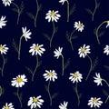 Field daisies seamless pattern on dark background. Vector