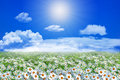 Field of daisy flowers and clouds on the clear blue sky Royalty Free Stock Photo