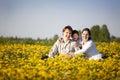Field of dandelions Royalty Free Stock Photo