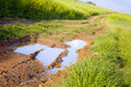 Field dirt road Stock Photography