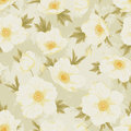 Field flover pattern flower seamless floral vintage shabby chic background for you scrapbook and design Stock Photos