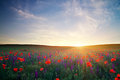 Field with flowers against the sunset sky grass violet and red poppies Stock Photos