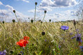 Field flowers background Royalty Free Stock Photo