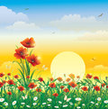 Field flowers on a background of solar dawn with poppies daisies Stock Photography