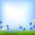 Field flowers daisy cornflower grass background Royalty Free Stock Photo