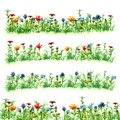 Field flowers in green summer grass on meadow glade variants bright red blue yellow purple objects bloom watercolor paint green fr Royalty Free Stock Photo