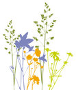 Field flowers, herbs and plants, vector, traced Royalty Free Stock Photo