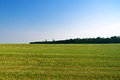 Field by the forest green at afternoon Stock Image