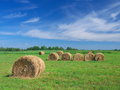 Field of freshly bales of hay with blue sky summer yellow roll beautiful Stock Photography