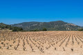 Field of grape vines early spring in Spain, mountains in the background Royalty Free Stock Photo