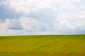 Field of grass and cloudy sky Royalty Free Stock Photo
