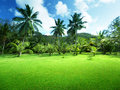 Field of grass and coconut palms on praslin island seychelles Royalty Free Stock Photography