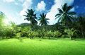 Field of grass and coconut palms on praslin island seychelles Royalty Free Stock Image