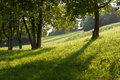 Field of grass with low sun shade and light and trees Stock Photos