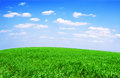 Field of grass and perfect sky green Royalty Free Stock Image